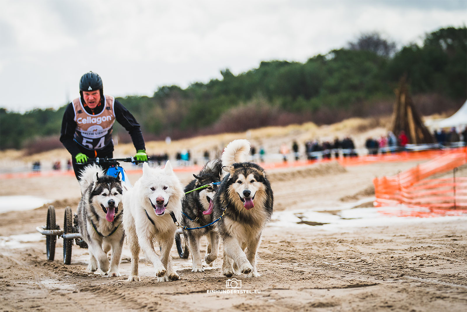 Schlittenhundewagen beim Baltic Lights Fest am Strand.