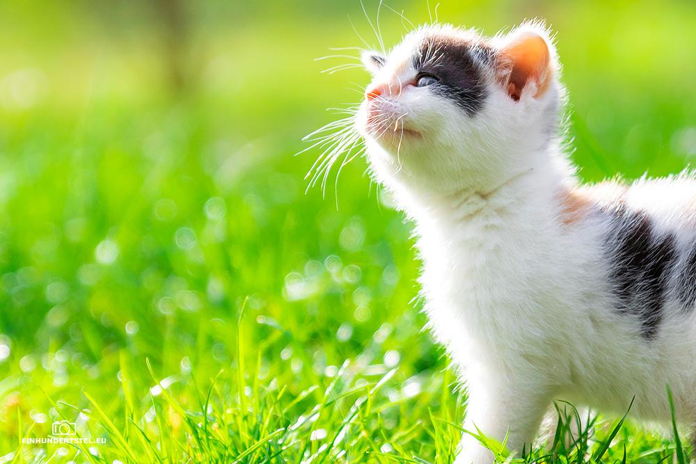Dieses Bild hat ein leeres Alt-Attribut. Der Dateiname ist Kitten-Elli-45-Wochen006.jpg